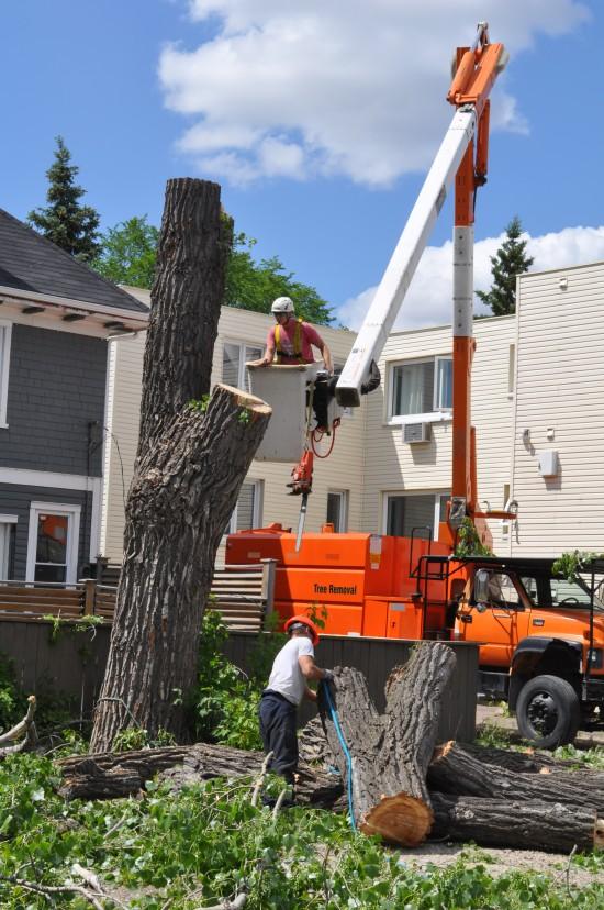 Regina Tree Removal Stump
