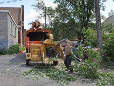 Regina Tree Removal Mulch