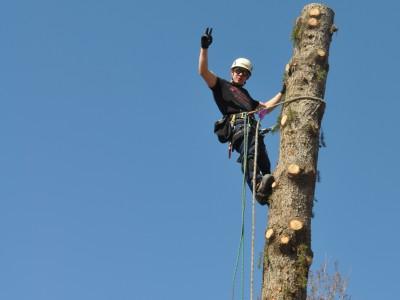 Tillotson Tree Removal