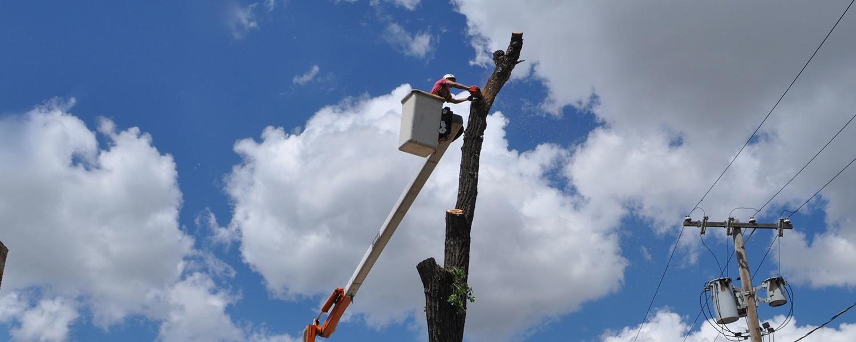 Tree Boom Lift